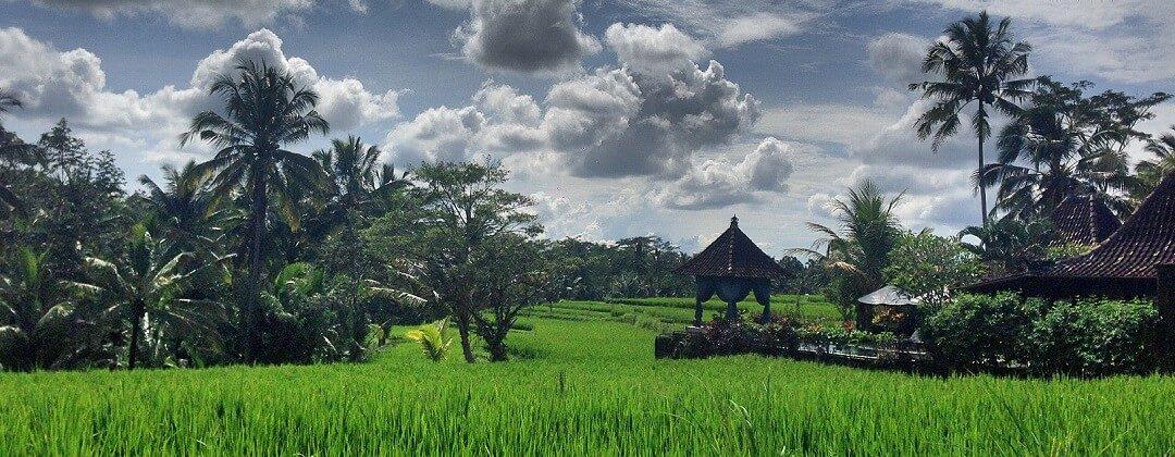 Rijstvelden Ubud – Bali