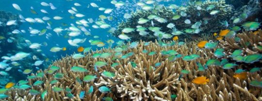 Snorkelen of duiken rond Menjangan Island - Bali, Indonesië
