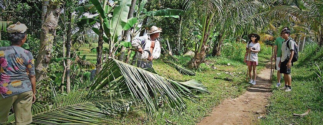 Trekking in Ubud
